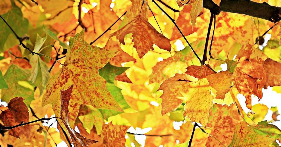 Autumn Orientation week and Registration